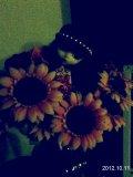 Photo de Ma-Pullip-Lunatic-Queen