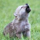 Photo de ptit-wolf4