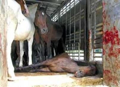 IMPORTANT Faites Tourner Sur Vos Blog Contre La Violence Envers - Porte box chevaux