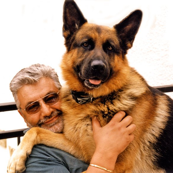 5 *  Non seulement il est beau, mais de plus c'est un amour mon fidèle compagnon. Je n'ai qu'une peur c'est de le perdre, il va bientôt avoir 13 ans.....Alors !!!             Photo prise en août 2001.