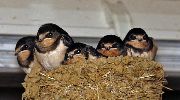 1566  *  Le nid est devenu trop petit.