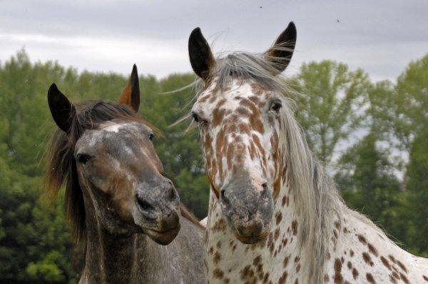 1654  *  Les copines ( de cheval ) Qui aurait oser la faire celle là à part moi ?