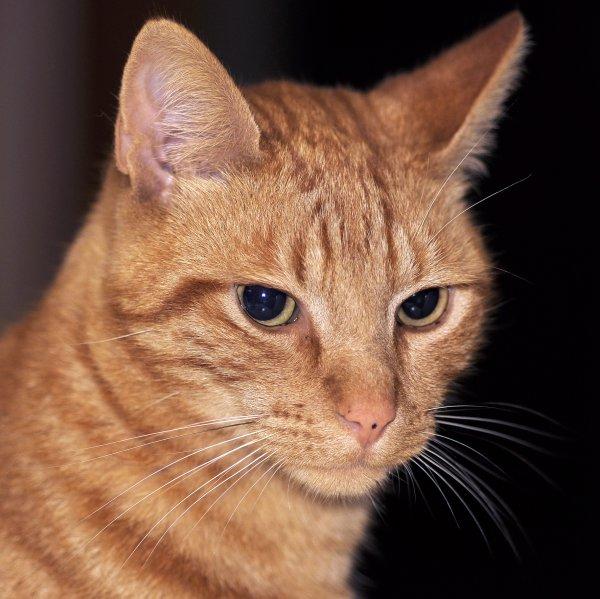 1691  *  Maître chat.