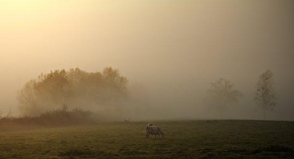 1754  *  La brume s'avance.