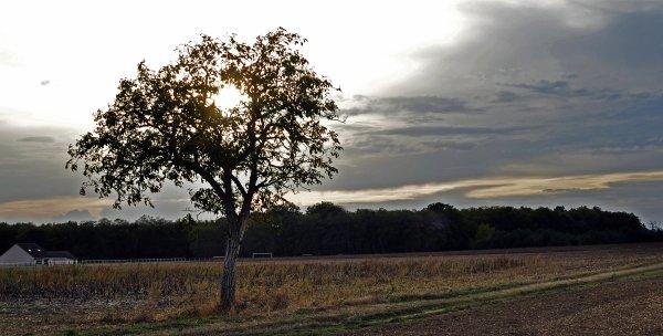 1772  *  L'arbre solitaire.