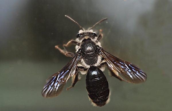1777  *   L'abeille qui joue au père Noêl.