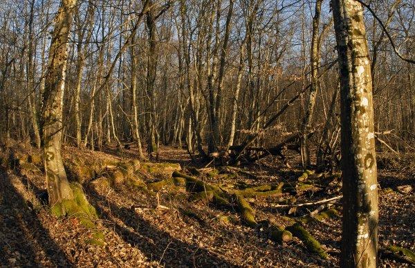 1789  *  Cimetière de vieux bois.