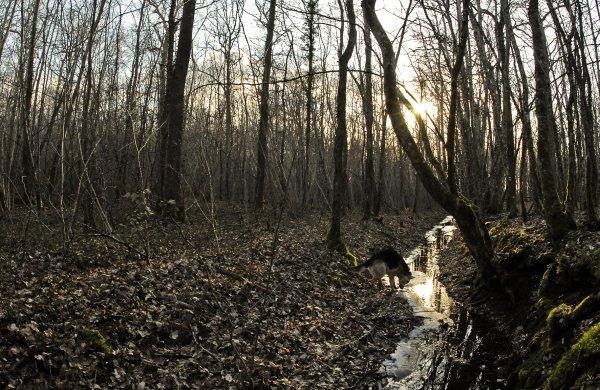 1790  * Le petit ruisseau.