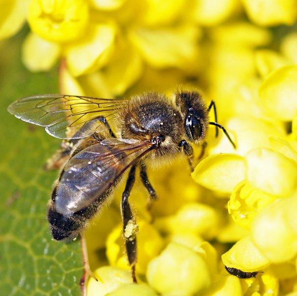 1795  *  Bzzz Bzzz Bzzz, les abeilles.