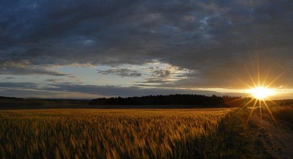 2010  *  Les blés d'or.