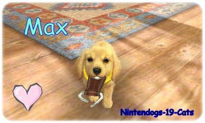 Mon premier chiot : Max