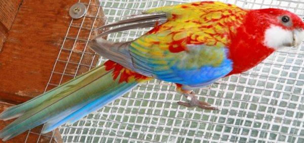 Omnicolore opaline pastel
