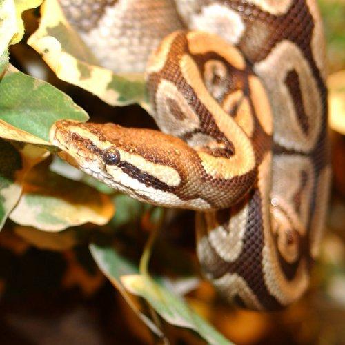 Blog de XxXpassion-reptilesXxX