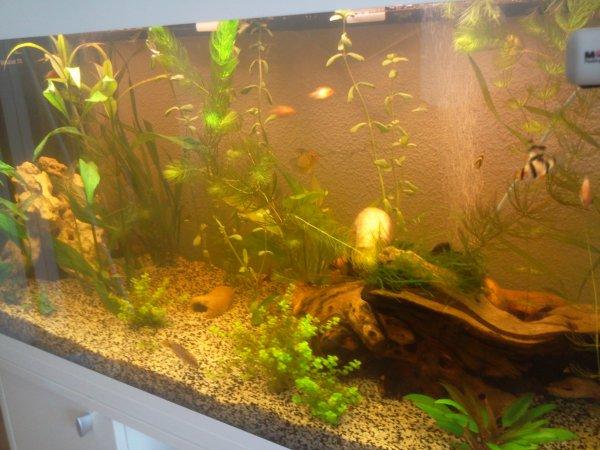 Voici mon aquarium ferplast dubai 200 L