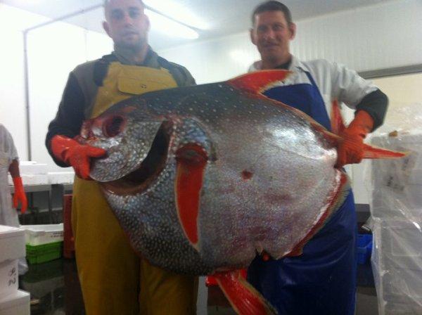 saumon des dieux   53 kg