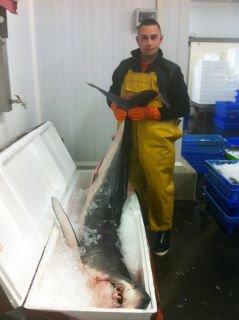requin mako  100 kg!!!!!