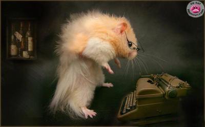 Un Hamster Intello Bonjour Les Amis