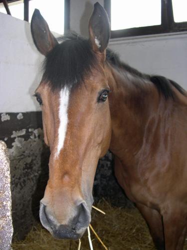 eux remenber  baristan mon amour de cheval le plus beau ♥ A. Repose en Paix tu nous Manques ♥