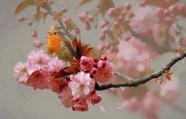 ***Très belle image d'un petit oiseau chanteur, prise sur le Net, pour vous souhaiter une très bonne journée***