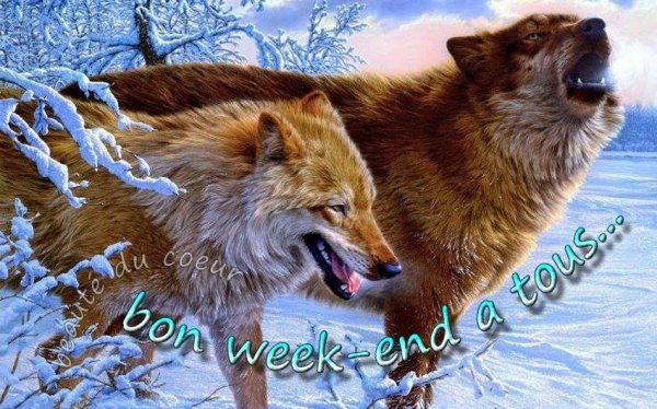 *****Bon week-end mes amies et amis*****