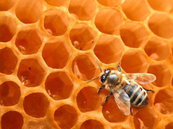 Le miel ... Une guerison