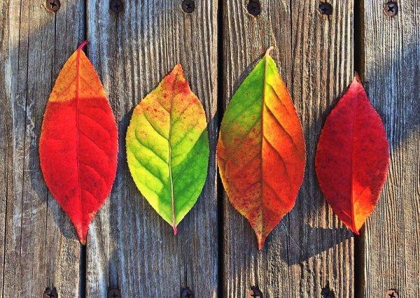 Fall Skin Care Strategies