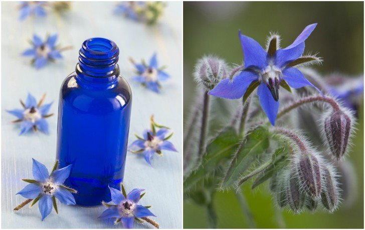 Is Borage Oil Nature's Secret to Beautiful Skin?