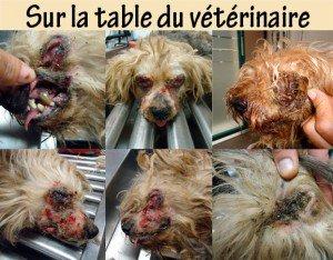 sauvez les sur actu animaux en fesant des clics gratuitement ou en faisan des dont en appelen :)