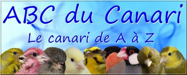 FORUM ABC du CANARI