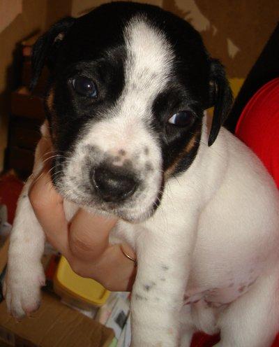 ça y est on a enfin reçu des photos des bébés de Digo... Encore 2bébés à adopter au 24/03/12