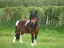 Photo de info-chevaux-et-poney