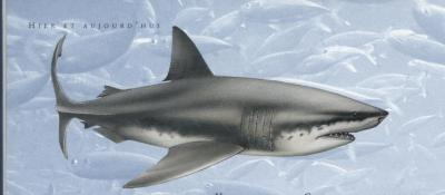 Megalodon requin dent de carbone datant 100 sites de rencontres en ligne gratuits en Chine