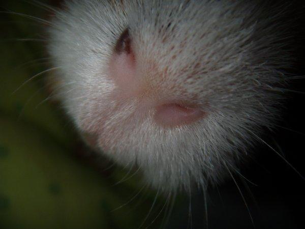 C'est mignon de voir le petit bout de nez de son cochon
