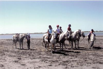 Il était une fois des chevaux et poneys