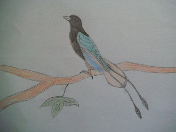 Paradisier Bleu