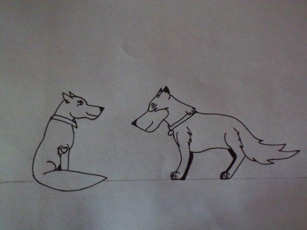 Couples de loups