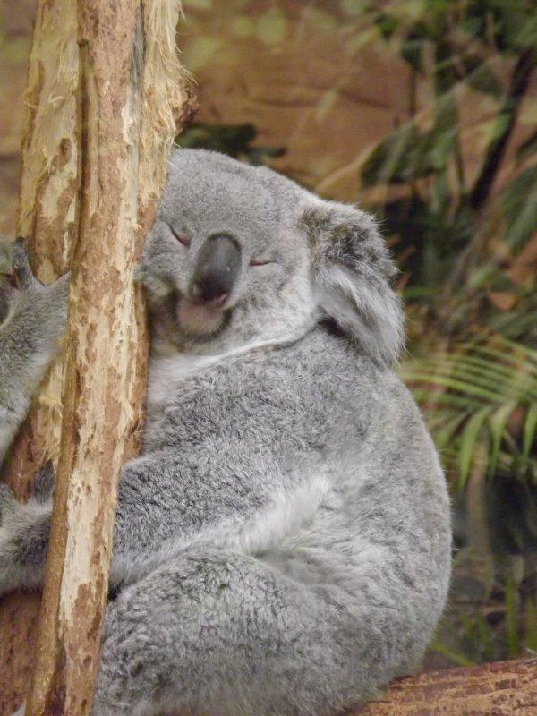 Zoo de Beauval 2