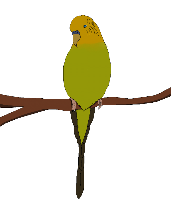 Perruche (version digitale)
