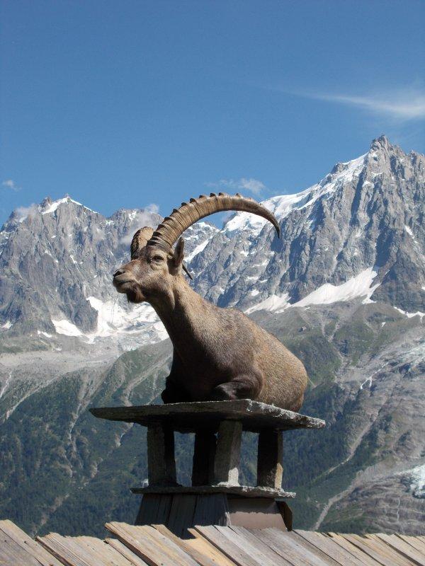Quelques animaux en montagne