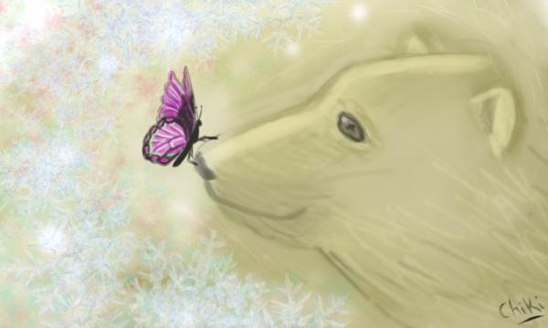 ours et papillon