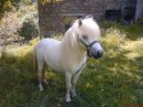 Photo de white-pony-x3