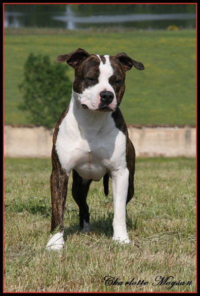 Exposition Canine de Roanne