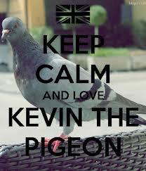 Si toi aussi quans tu vois un pigeon tu hurles Kevin!!!