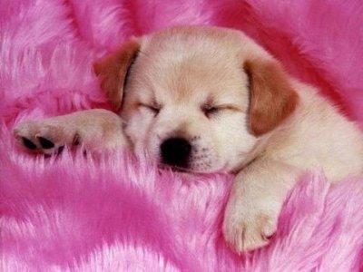 mmmmm dormir!!!