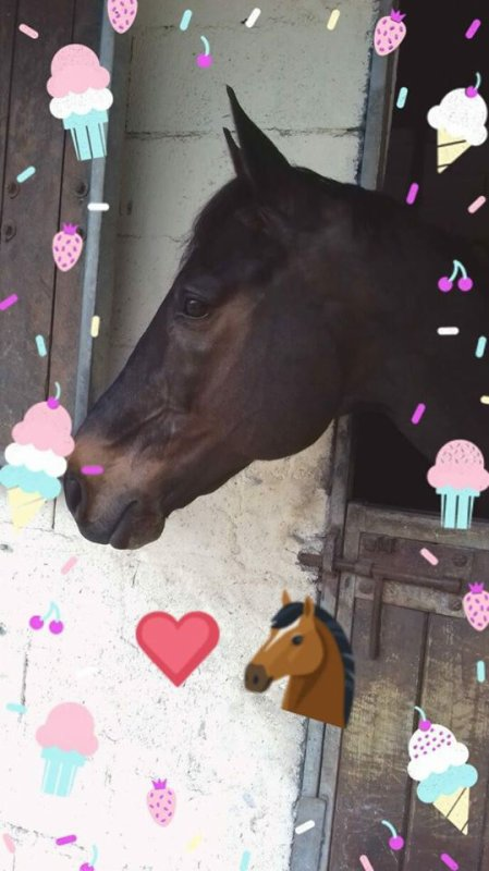 Petit pony ! :3