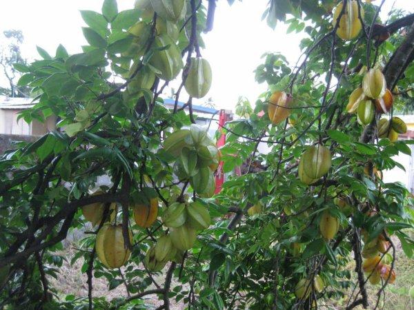 Découverte de la botanique de l'île