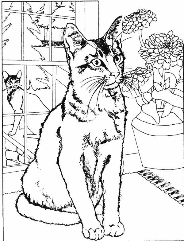Joli chat en dessin