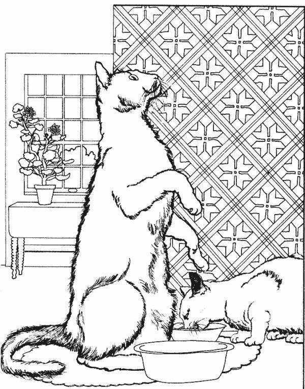 Dessin avec des chats