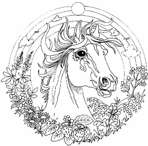 Coloriage avec un cheval