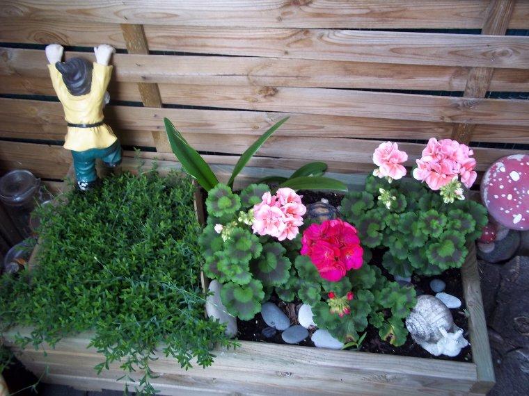mon petit jardin !